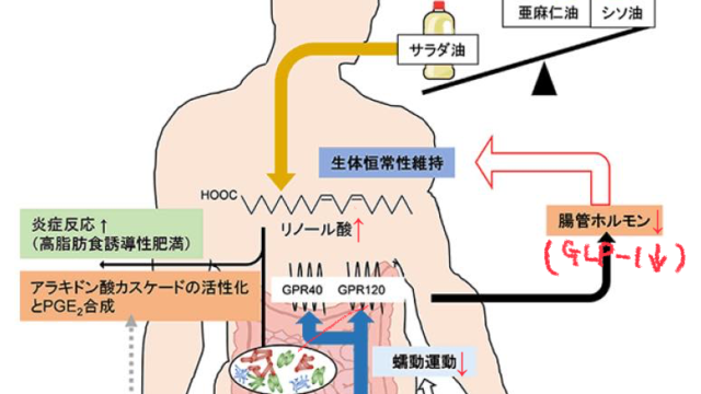 リノール酸とGLP-1