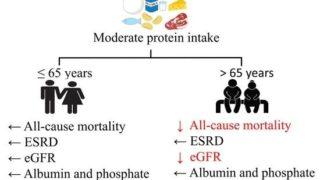 CKD患者の中等度タンパク食1